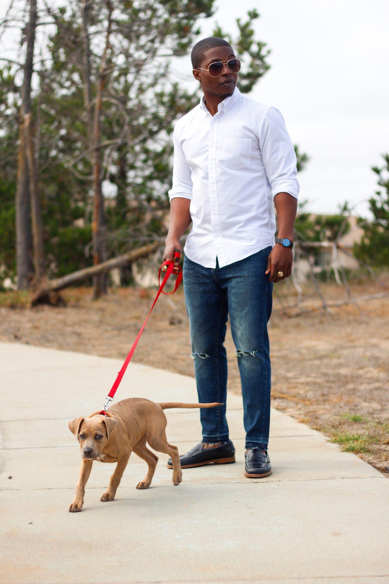 dapper advisor puppy navy sebago penny legacy loafers